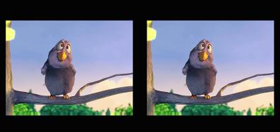 kartinka-ptichki