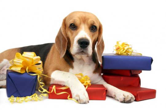 gifts-for-pets