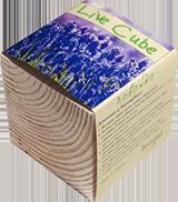 Набір для вирощування Brinjal 'Live Cube' лаванда